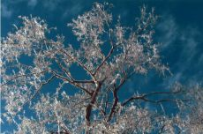 Ice storm, December 13th - Photo by Angela Duga